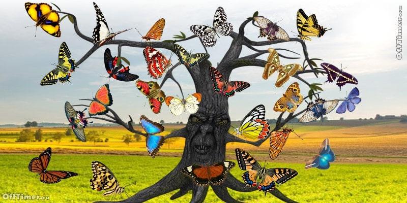 головоломка на внимательность - найди пару одинаковых бабочек