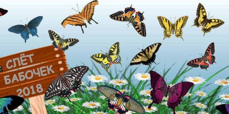 головоломка на внимательность - найди лишнюю бабочку