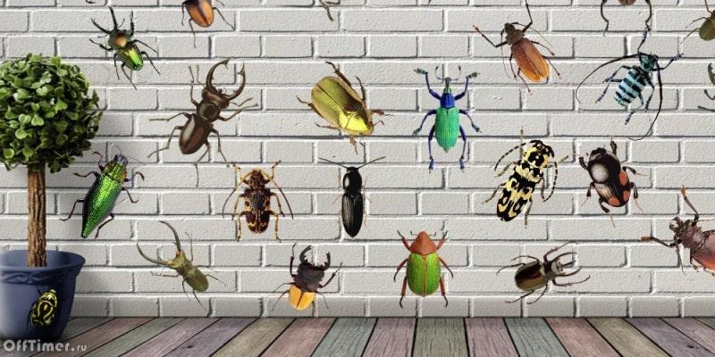головоломка на внимательность - собери жуков