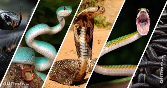 тест - ядовитые змеи